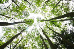 bosque imagem de stock