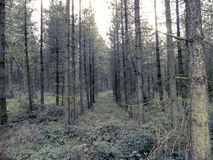 Bosque Foto de archivo