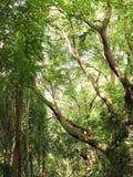 Bosque Imagenes de archivo