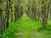 bosque Fotografia de Stock Royalty Free