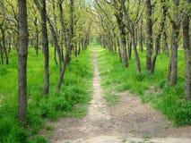 bosque Foto de Stock Royalty Free