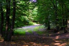 Bosque fotos de archivo