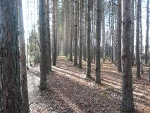 bosque Foto de Stock