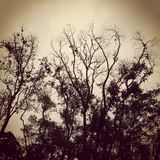 Bosque Imagen de archivo libre de regalías
