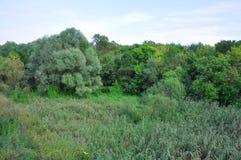 Bosque Fotografía de archivo libre de regalías