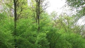 Bosque almacen de video