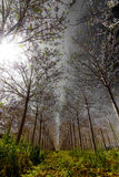 bosque fotos de stock