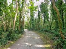 Bosque 2 Foto de archivo libre de regalías