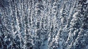 Bosque aéreo del invierno con caer de la nieve metrajes