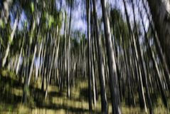 Bosque abstracto Foto de archivo libre de regalías
