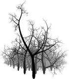 Bosque abstracto blanco y negro Imagenes de archivo