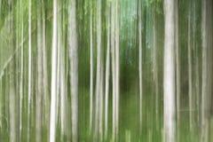 Bosque abstracto del abedul del fondo Fotos de archivo