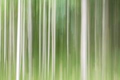 Bosque abstracto del abedul del fondo Fotos de archivo libres de regalías