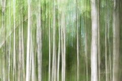 Bosque abstracto del abedul del fondo Imagenes de archivo