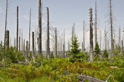 Bosque acabado natural Fotografía de archivo libre de regalías
