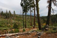 Bosque afectado por desastre del viento en Yosemite Imagenes de archivo