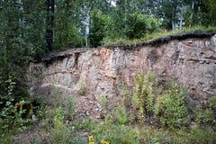 Bosque al borde del acantilado Imagen de archivo libre de regalías