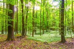 Bosque alemán de la primavera Foto de archivo libre de regalías