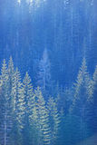Bosque alpestre fotos de archivo