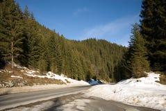 Bosque alpestre foto de archivo libre de regalías