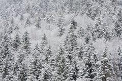 Bosque alpestre en invierno Imagenes de archivo
