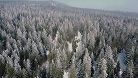 Bosque alpino almacen de video