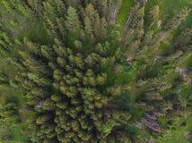 Bosque alpino del cielo imagenes de archivo