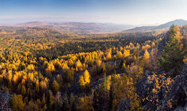Bosque amarillo del otoño Foto de archivo libre de regalías