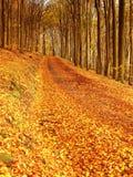 Bosque amarillo-naranja de Autumn Forest Autumn con la tierra colorida Imagen de archivo
