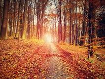 Bosque amarillo-naranja de Autumn Forest Autumn con la tierra colorida Foto de archivo libre de regalías