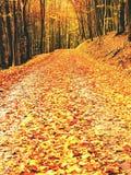 Bosque amarillo-naranja de Autumn Forest Autumn con la tierra colorida Fotos de archivo