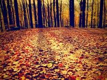 Bosque amarillo-naranja de Autumn Forest Autumn con la tierra colorida Fotografía de archivo