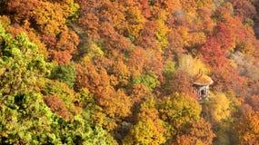 Bosque anaranjado interior ocultado Pavillions Foto de archivo libre de regalías