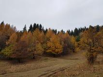 Bosque anaranjado y rojo hermoso del otoño Imágenes de archivo libres de regalías