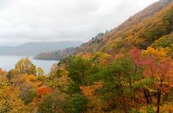 Bosque anaranjado y rojo hermoso del otoño Imagen de archivo libre de regalías