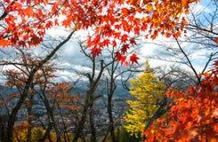 Bosque anaranjado y rojo hermoso del otoño Imagen de archivo
