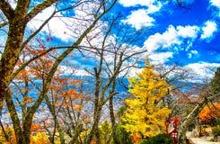 Bosque anaranjado y rojo hermoso del otoño Foto de archivo