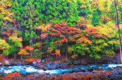 Bosque anaranjado y rojo hermoso del otoño Foto de archivo libre de regalías