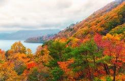 Bosque anaranjado y rojo hermoso del otoño Fotografía de archivo