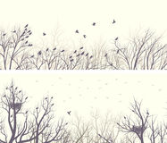 Bosque ancho horizontal de las banderas con las ramas y los pájaros de árbol Fotografía de archivo libre de regalías