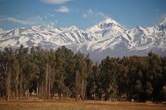 Bosque antes de tapas nevadas de la montaña Imagen de archivo libre de regalías