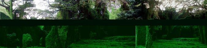 Bosque arcaico Fotos de archivo libres de regalías