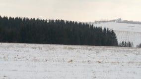 Bosque archivado campo del prado del paisaje de la montaña del invierno metrajes