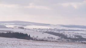 Bosque archivado campo del prado del paisaje de la montaña del invierno almacen de metraje de vídeo