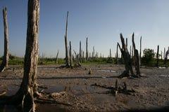Bosque arruinado Fotografía de archivo libre de regalías