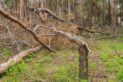 Bosque arruinado de la tormenta Foto de archivo
