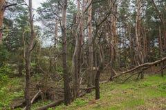 Bosque arruinado de la tormenta Fotos de archivo