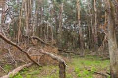 Bosque arruinado de la tormenta Imagen de archivo