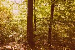 Bosque asoleado Fotos de archivo libres de regalías