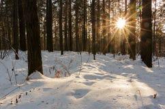 Bosque asoleado Fotografía de archivo